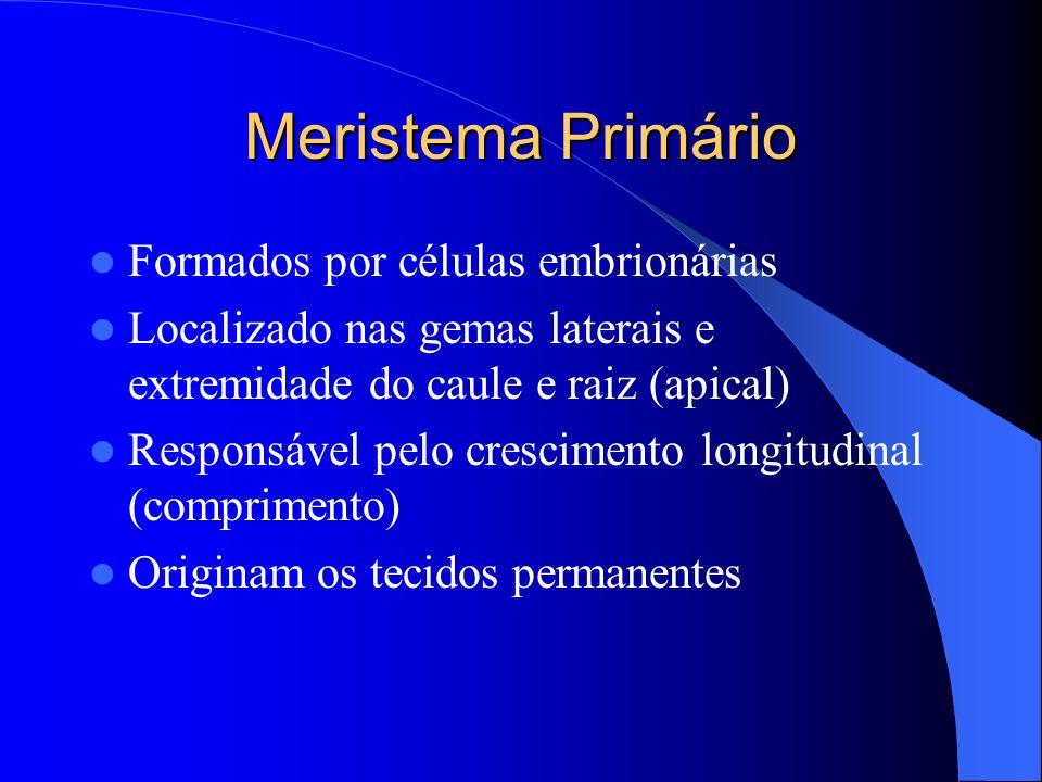 Meristema Primário Formados por células embrionárias Localizado nas gemas laterais e extremidade do caule e raiz (apical) Responsável pelo crescimento