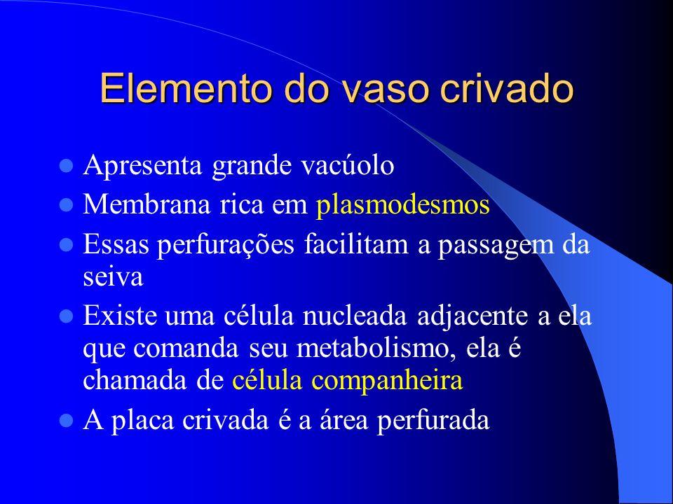 Elemento do vaso crivado Apresenta grande vacúolo Membrana rica em plasmodesmos Essas perfurações facilitam a passagem da seiva Existe uma célula nucl