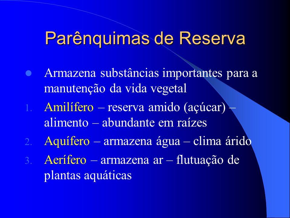 Parênquimas de Reserva Armazena substâncias importantes para a manutenção da vida vegetal 1. Amilífero – reserva amido (açúcar) – alimento – abundante