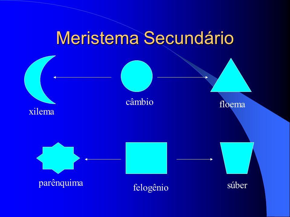 Tecidos de Transporte Com a ocupação do meio terrestre o sistema vascular é de grande valor.
