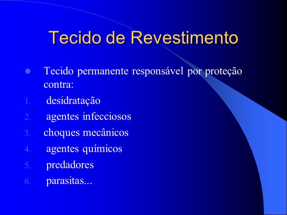 Tecido de Revestimento - Epiderme Tecido de revestimento formado por única camada de células Onde ainda não ocorreu crescimento em espessura Células vivas, aclorofiladas, com cutícula (cera) Protege contra desidratação, traumas e infecções Apresenta anexos