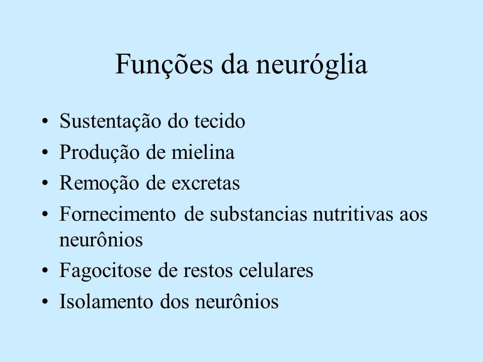 Funções da neuróglia Sustentação do tecido Produção de mielina Remoção de excretas Fornecimento de substancias nutritivas aos neurônios Fagocitose de