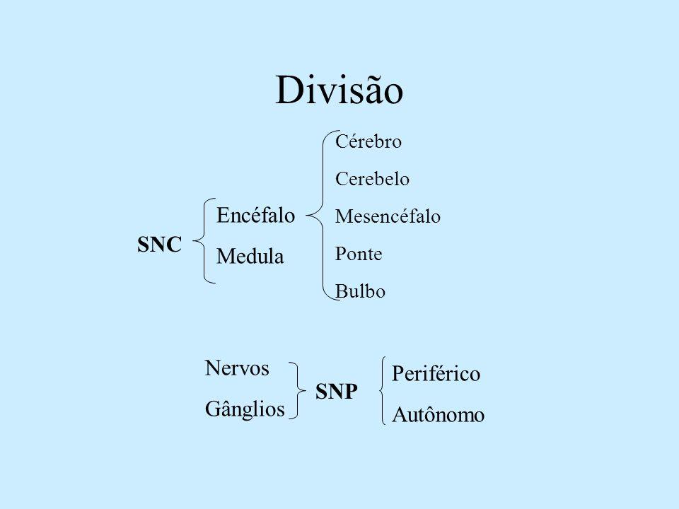 Divisão SNC Encéfalo Medula SNP Nervos Gânglios Periférico Autônomo Cérebro Cerebelo Mesencéfalo Ponte Bulbo