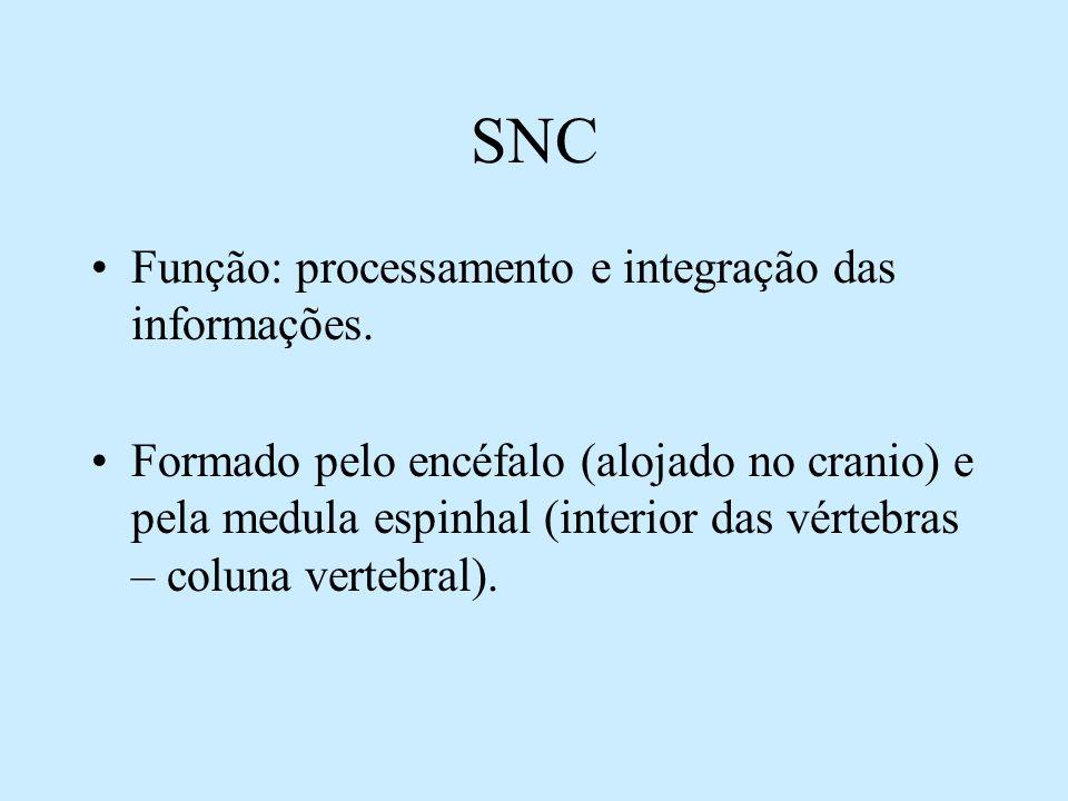 SNC Função: processamento e integração das informações. Formado pelo encéfalo (alojado no cranio) e pela medula espinhal (interior das vértebras – col