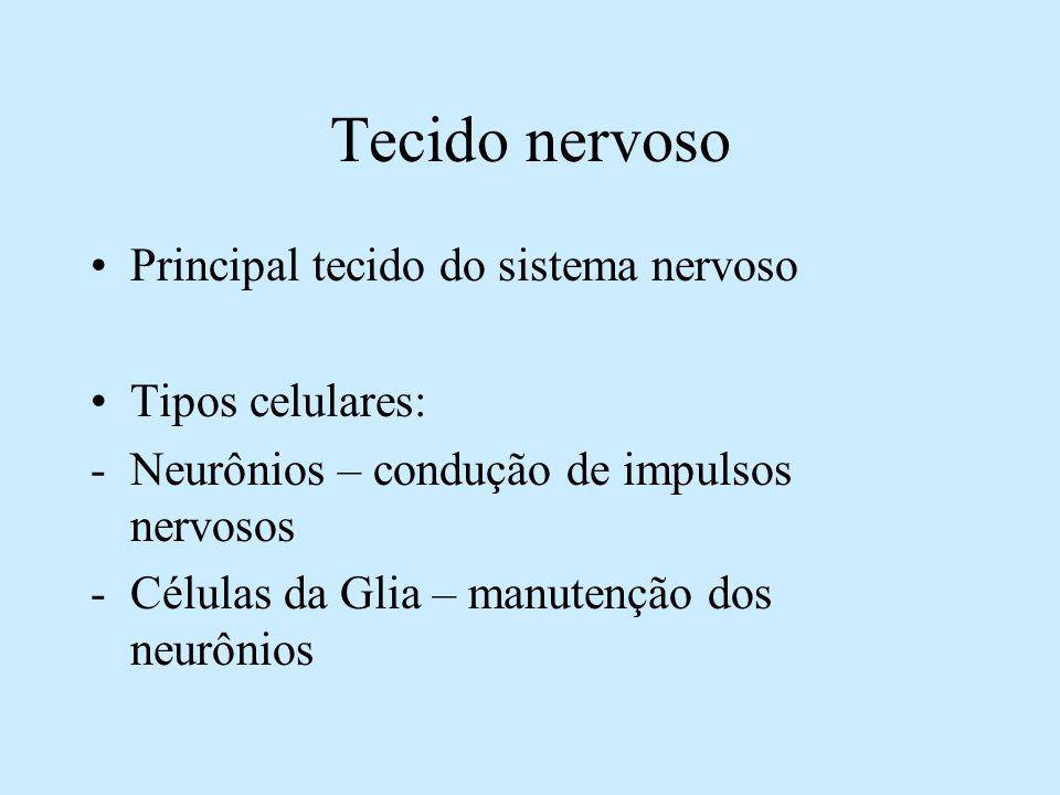 Tecido nervoso Principal tecido do sistema nervoso Tipos celulares: -Neurônios – condução de impulsos nervosos -Células da Glia – manutenção dos neurô