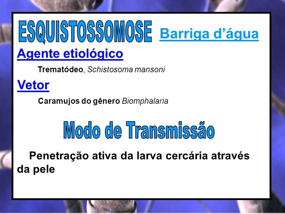 Barriga dágua Agente etiológico Trematódeo, Schistosoma mansoni Penetração ativa da larva cercária através da pele Vetor Caramujos do gênero Biomphala