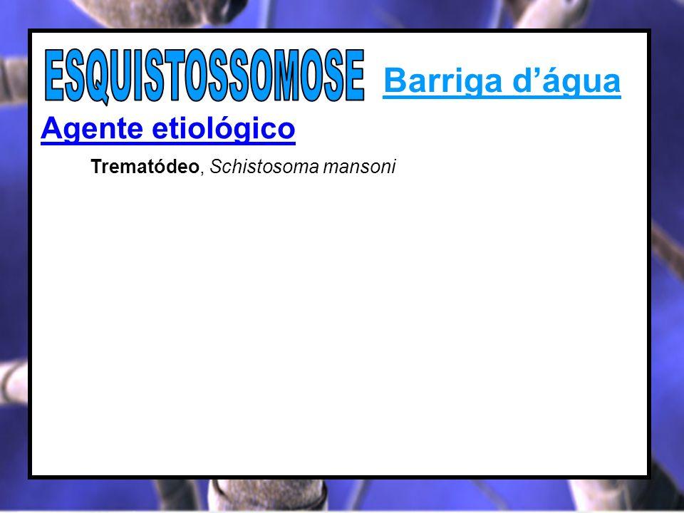 Barriga dágua Agente etiológico Trematódeo, Schistosoma mansoni