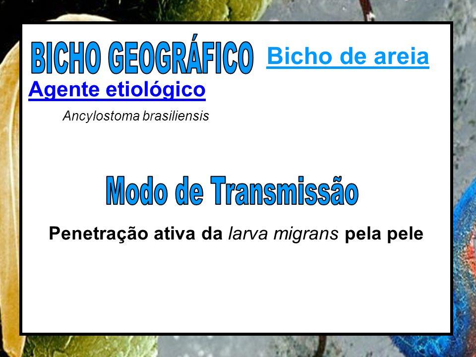 Agente etiológico Ancylostoma brasiliensis Penetração ativa da larva migrans pela pele Bicho de areia