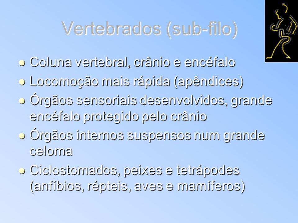 Vertebrados (sub-filo) Coluna vertebral, crânio e encéfalo Coluna vertebral, crânio e encéfalo Locomoção mais rápida (apêndices) Locomoção mais rápida