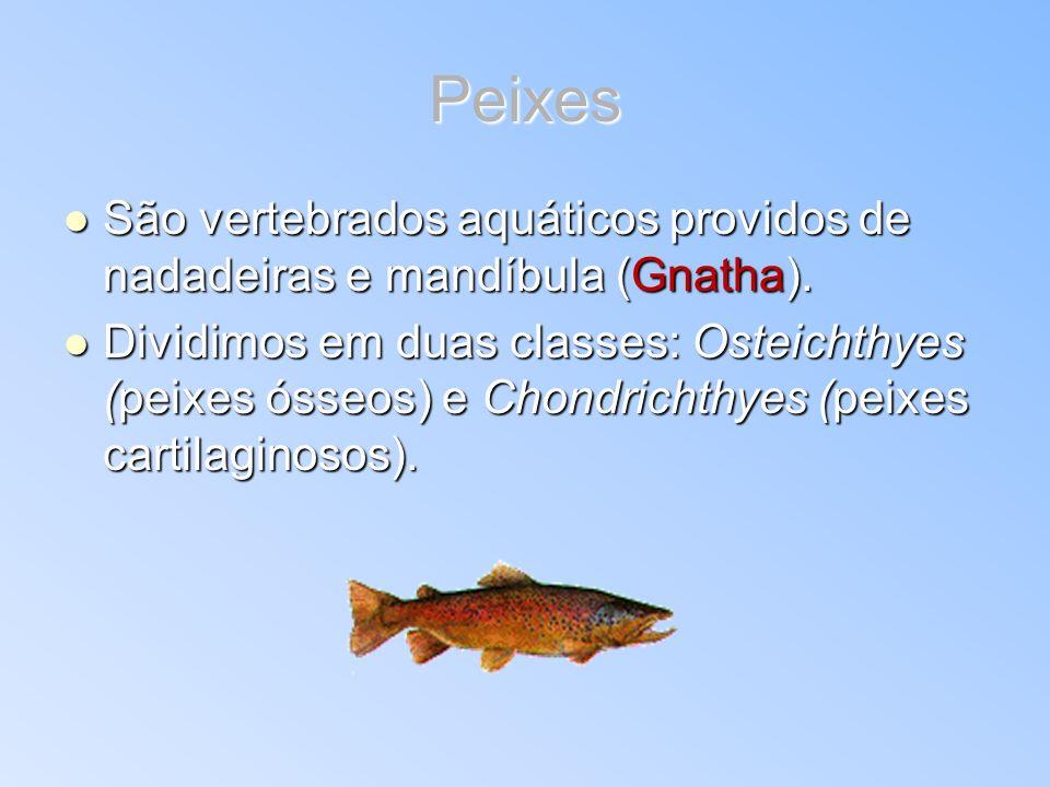 Peixes São vertebrados aquáticos providos de nadadeiras e mandíbula (Gnatha). São vertebrados aquáticos providos de nadadeiras e mandíbula (Gnatha). D