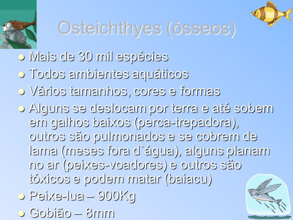 Osteichthyes (ósseos) Mais de 30 mil espécies Mais de 30 mil espécies Todos ambientes aquáticos Todos ambientes aquáticos Vários tamanhos, cores e for