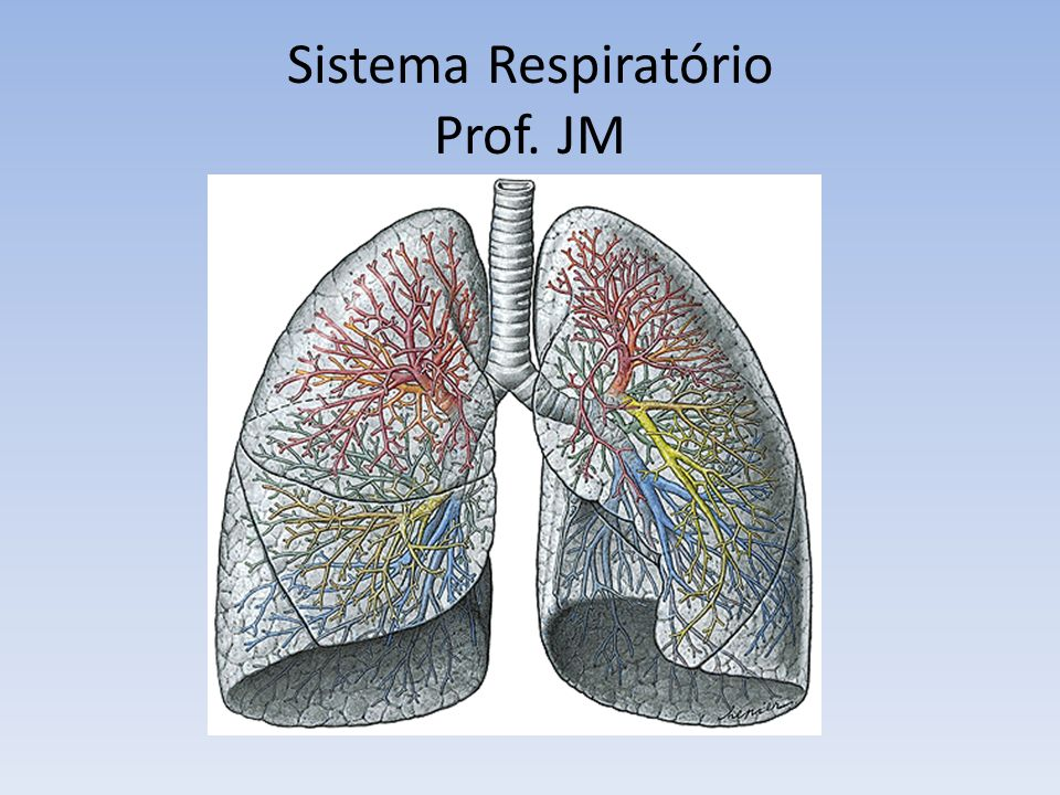 Sistema Respiratório Prof. JM