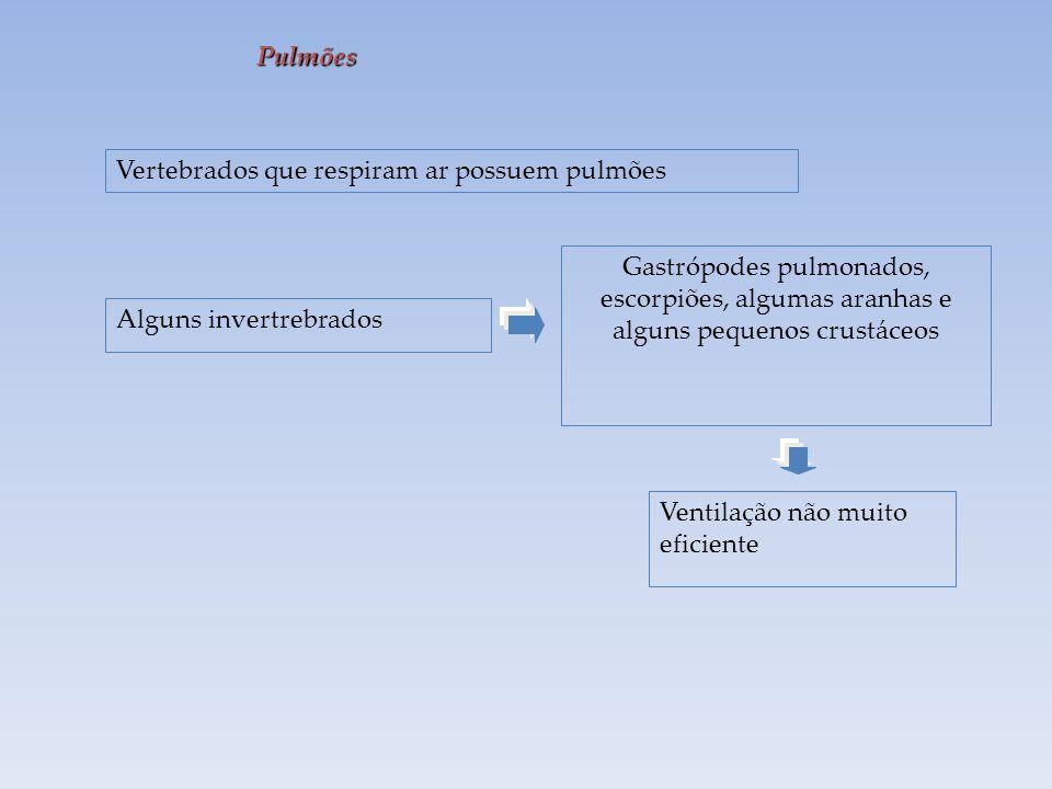 Pulmões Vertebrados que respiram ar possuem pulmões Alguns invertrebrados Gastrópodes pulmonados, escorpiões, algumas aranhas e alguns pequenos crustáceos Ventilação não muito eficiente