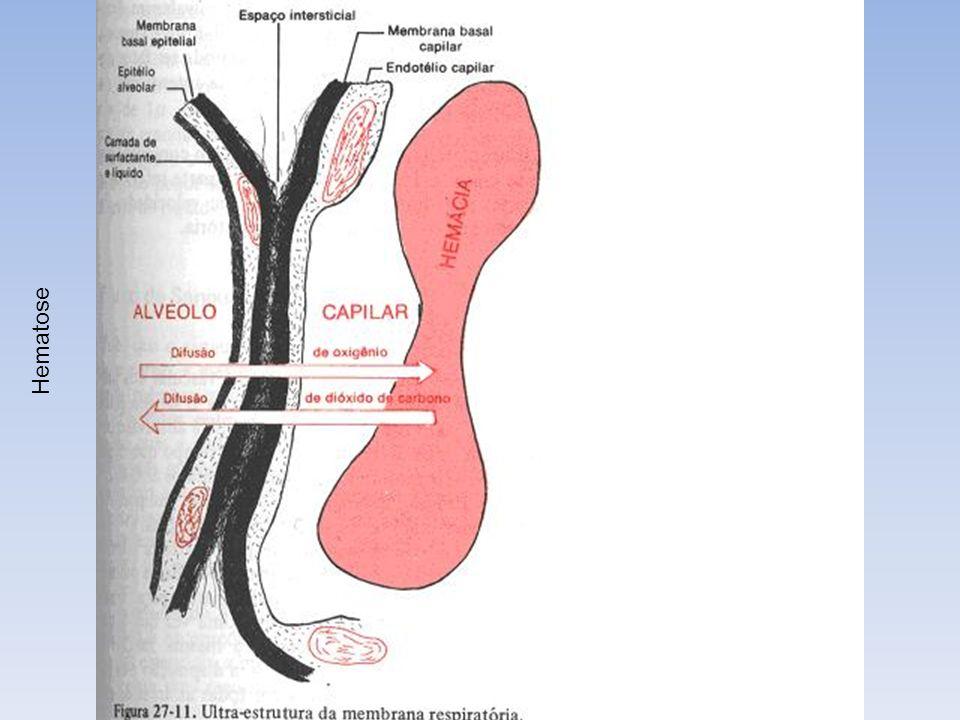 Hematose