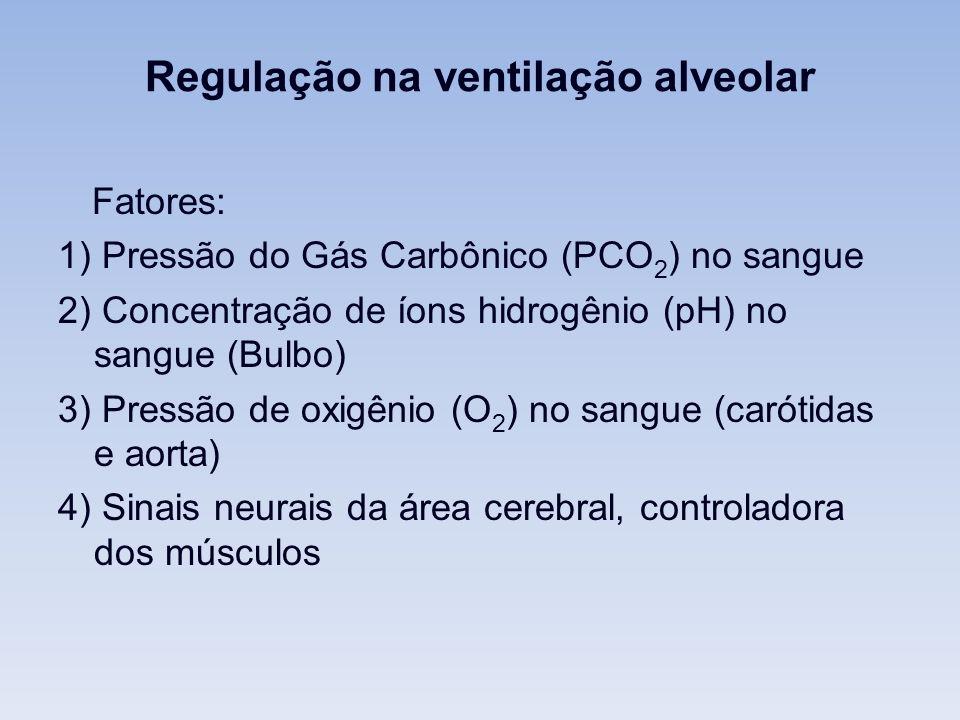 Regulação na ventilação alveolar Fatores: 1) Pressão do Gás Carbônico (PCO 2 ) no sangue 2) Concentração de íons hidrogênio (pH) no sangue (Bulbo) 3) Pressão de oxigênio (O 2 ) no sangue (carótidas e aorta) 4) Sinais neurais da área cerebral, controladora dos músculos