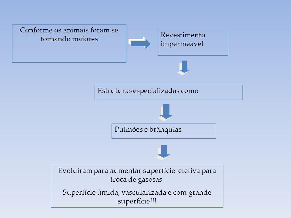 Revestimento impermeável Surgem mecanismos p/ aumentar a superfície de trocas gasosas