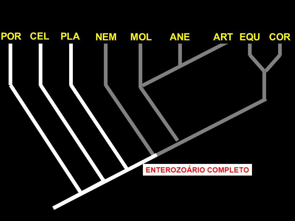 POR CEL PLA NEMMOLANEARTEQUCOR ENTEROZOÁRIO COMPLETO
