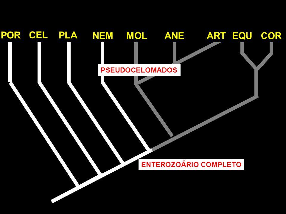 POR CEL PLA NEMMOLANEARTEQUCOR ENTEROZOÁRIO COMPLETO PSEUDOCELOMADOS