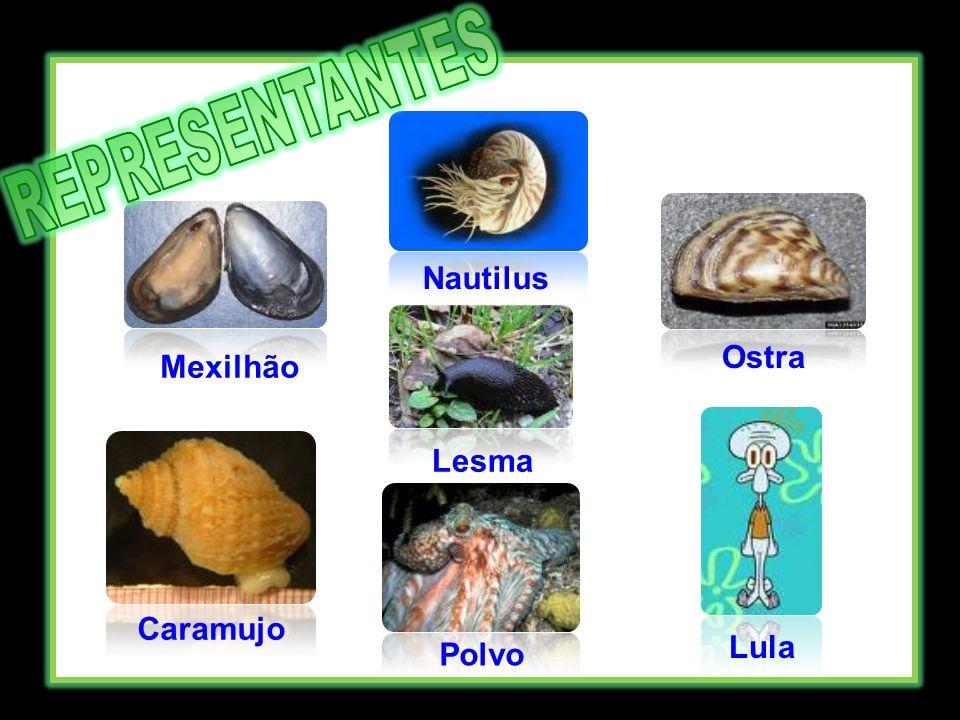 Mexilhão Nautilus Ostra Caramujo Polvo Lula Lesma