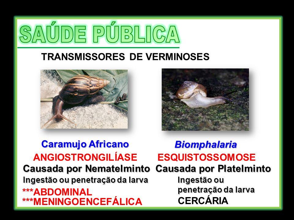 TRANSMISSORES DE VERMINOSES Caramujo Africano Biomphalaria ANGIOSTRONGILÍASE Causada por Nematelminto Ingestão ou penetração da larva ***ABDOMINAL ***