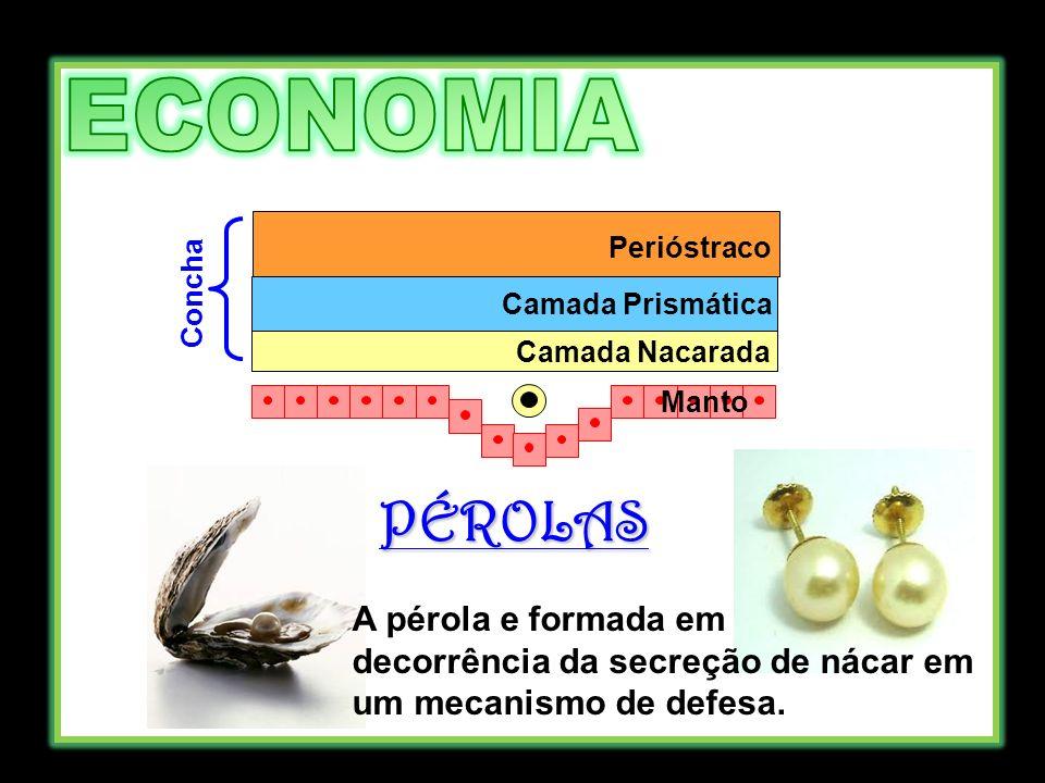 Manto Camada Nacarada Camada Prismática Perióstraco Concha PÉROLAS A pérola e formada em decorrência da secreção de nácar em um mecanismo de defesa.
