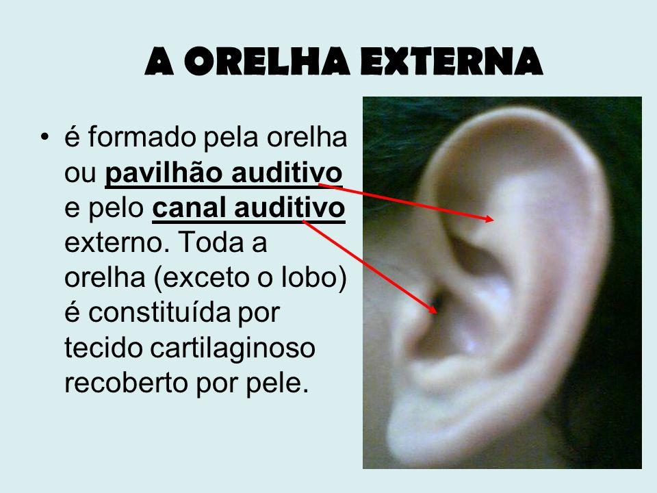 A ORELHA EXTERNA é formado pela orelha ou pavilhão auditivo e pelo canal auditivo externo. Toda a orelha (exceto o lobo) é constituída por tecido cart