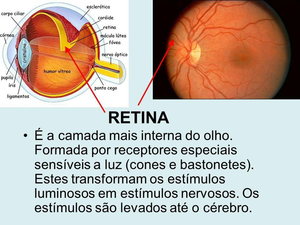RETINA É a camada mais interna do olho. Formada por receptores especiais sensíveis a luz (cones e bastonetes). Estes transformam os estímulos luminoso