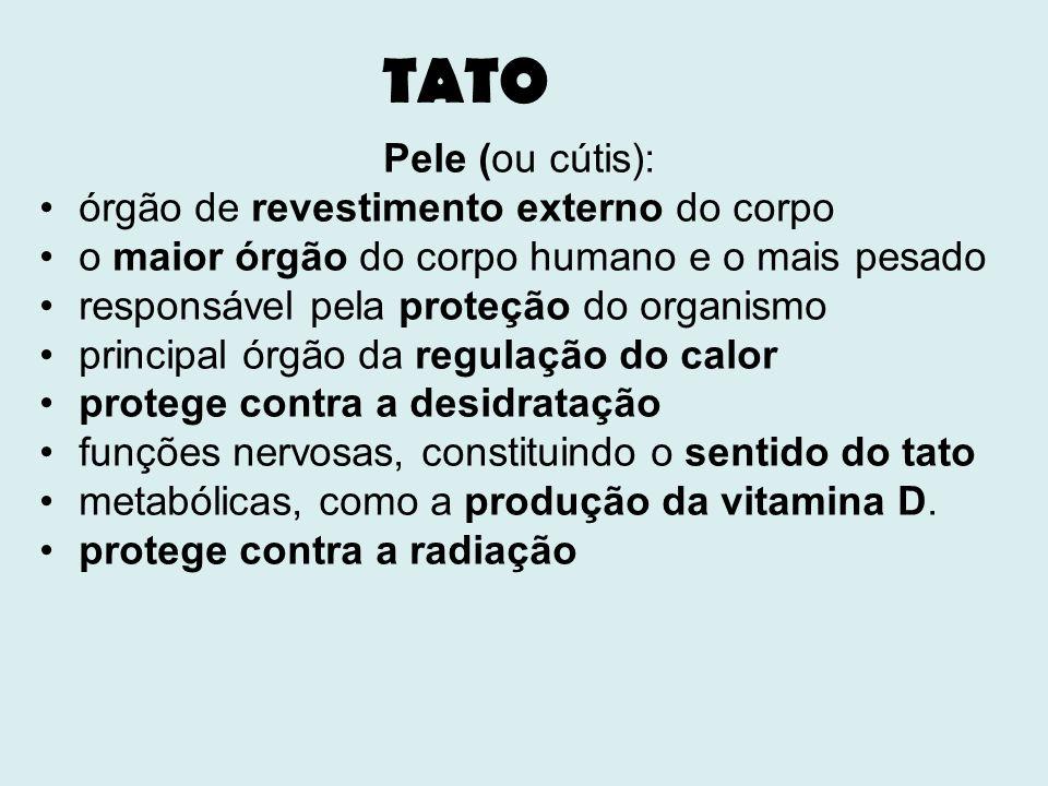 TATO Pele (ou cútis): órgão de revestimento externo do corpo o maior órgão do corpo humano e o mais pesado responsável pela proteção do organismo prin
