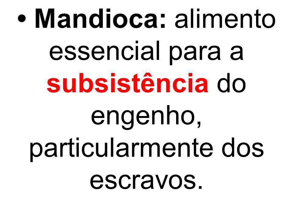 Mandioca: alimento essencial para a subsistência do engenho, particularmente dos escravos.