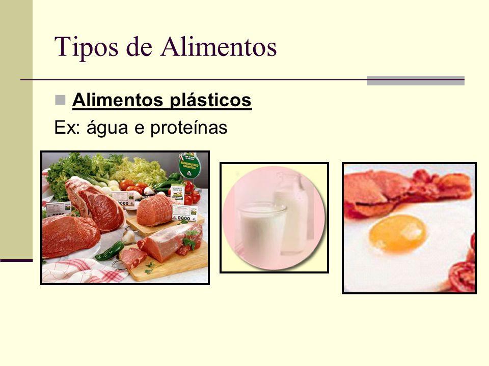 Tipos de Alimentos Alimentos plásticos Ex: água e proteínas