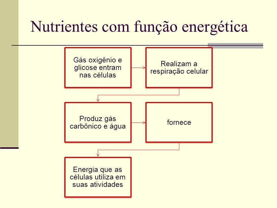 Nutrientes com função energética Gás oxigênio e glicose entram nas células Realizam a respiração celular Produz gás carbônico e água fornece Energia q