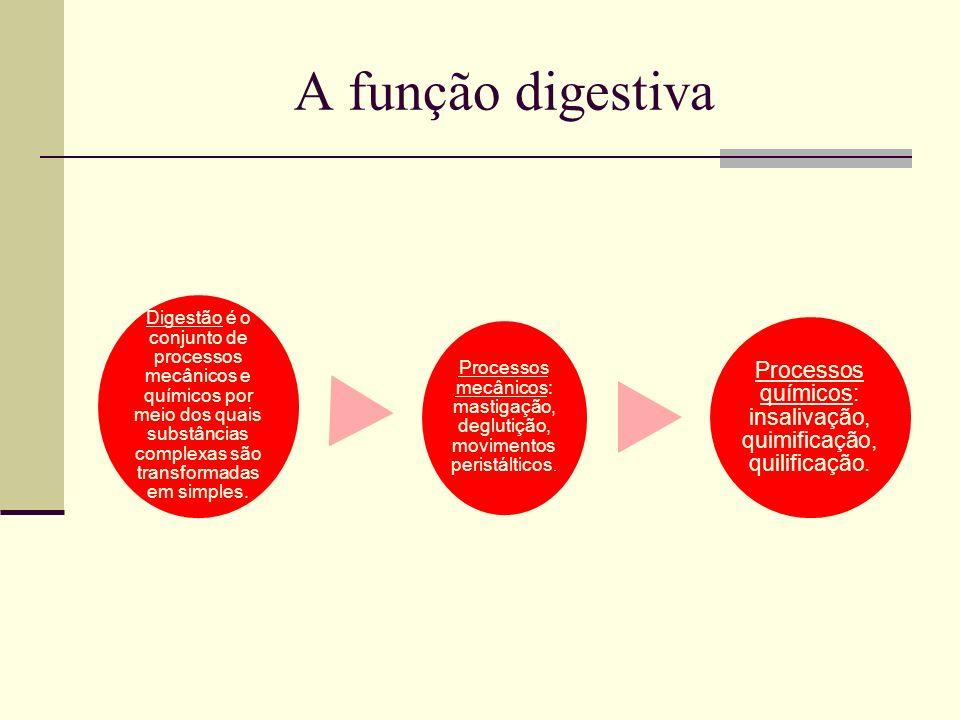 A função digestiva Digestão é o conjunto de processos mecânicos e químicos por meio dos quais substâncias complexas são transformadas em simples. Proc