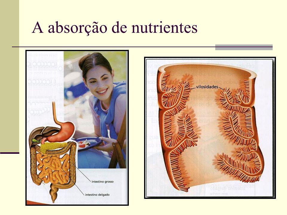 A absorção de nutrientes