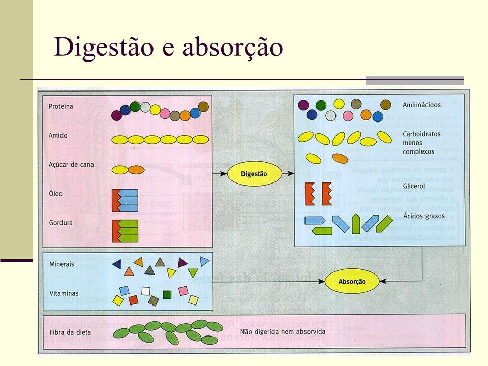 Digestão e absorção