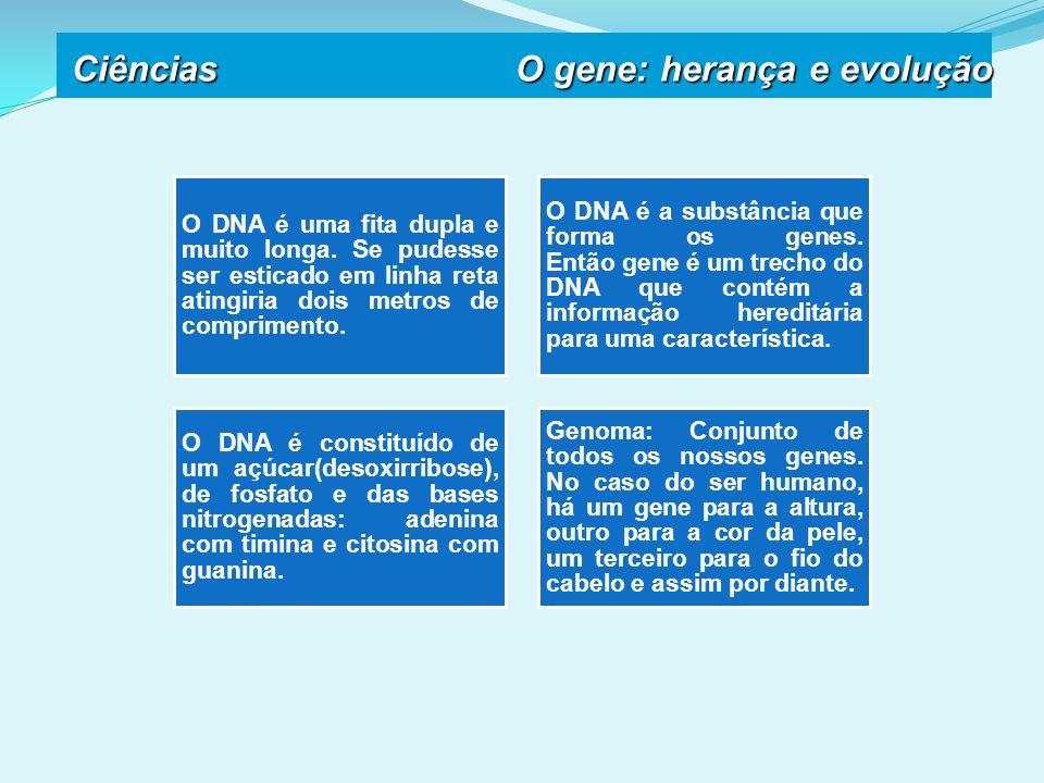 O DNA é uma fita dupla e muito longa.
