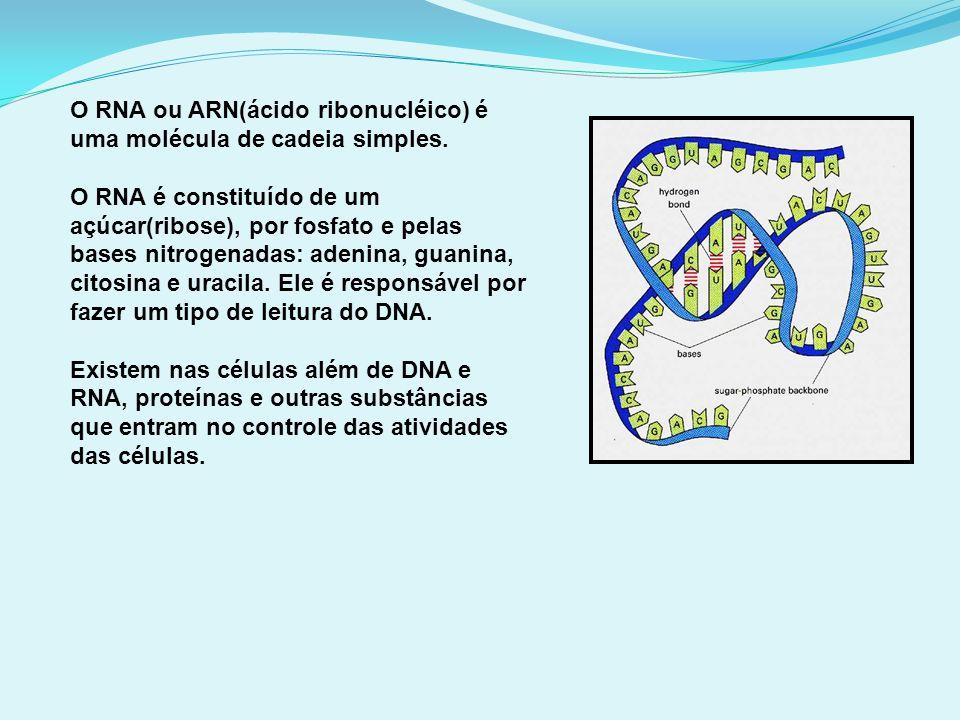 O RNA ou ARN(ácido ribonucléico) é uma molécula de cadeia simples.