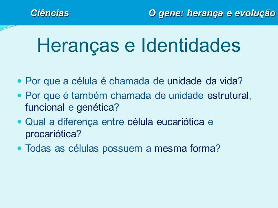 O DNA e as Bases nitrogenadas DNA ADENINAGUANINATIMINACITOSINA