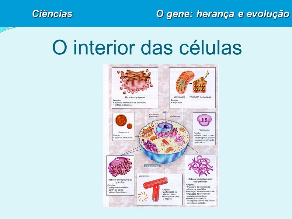 O interior das células Ciências O gene: herança e evolução
