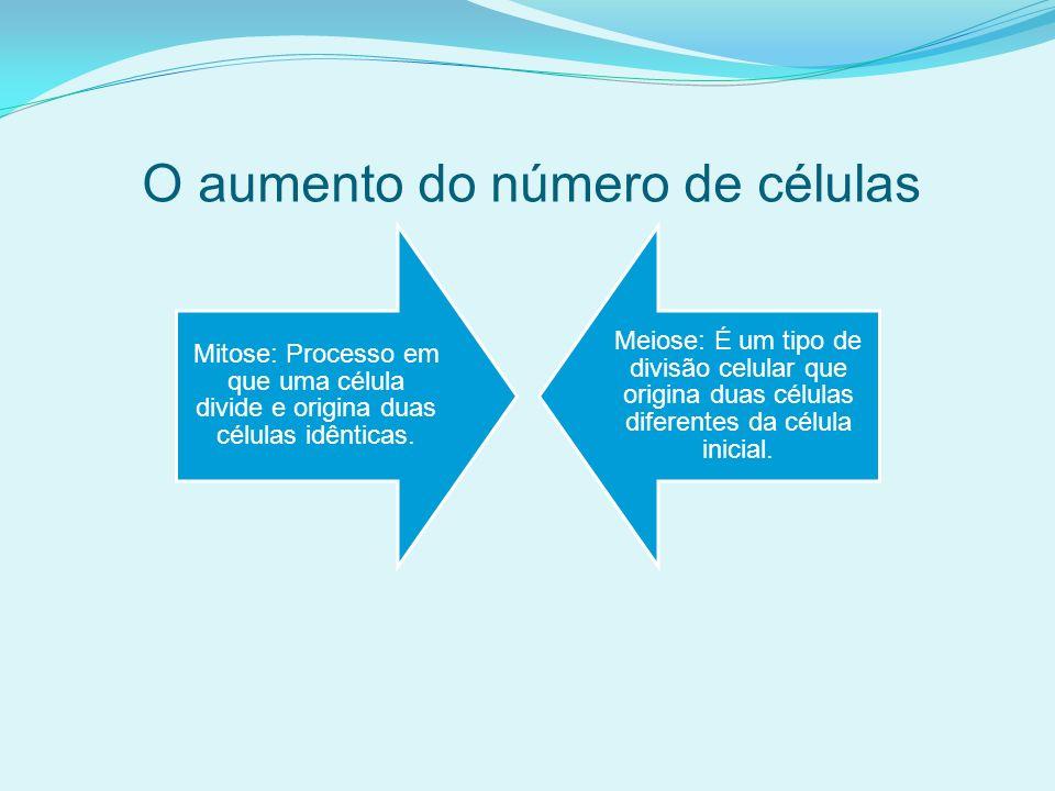 O aumento do número de células Mitose: Processo em que uma célula divide e origina duas células idênticas.
