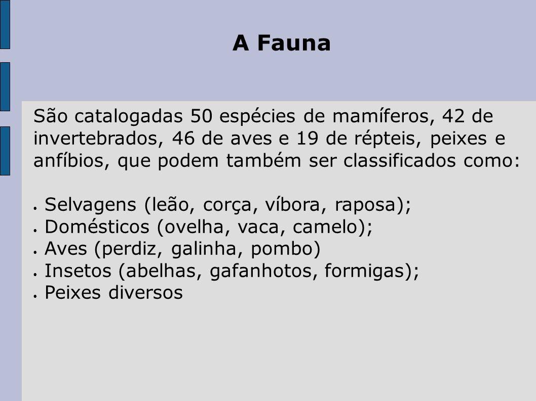 A Fauna São catalogadas 50 espécies de mamíferos, 42 de invertebrados, 46 de aves e 19 de répteis, peixes e anfíbios, que podem também ser classificad