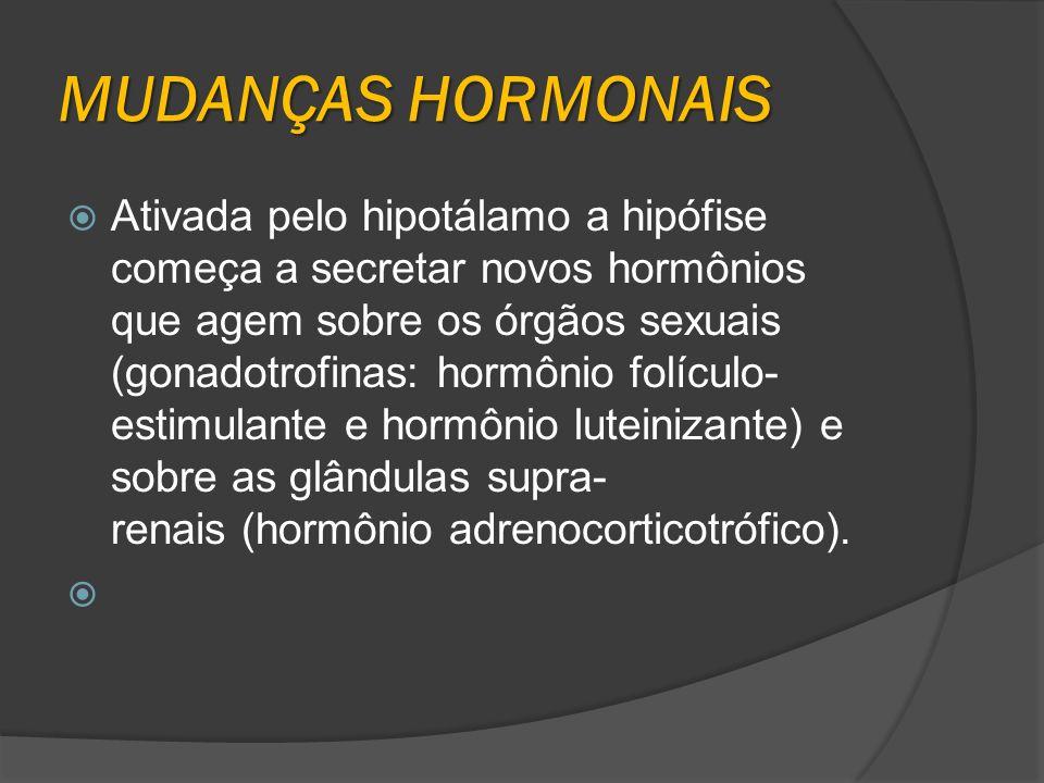 MUDANÇAS HORMONAIS Ativada pelo hipotálamo a hipófise começa a secretar novos hormônios que agem sobre os órgãos sexuais (gonadotrofinas: hormônio fol