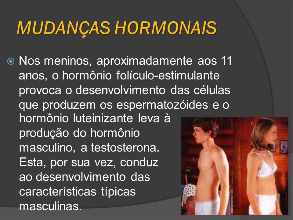 MUDANÇAS HORMONAIS Nos meninos, aproximadamente aos 11 anos, o hormônio folículo-estimulante provoca o desenvolvimento das células que produzem os esp