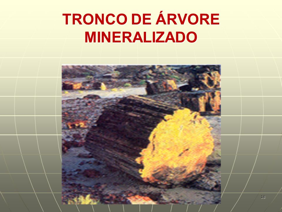 TRONCO DE ÁRVORE MINERALIZADO 18