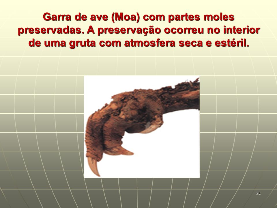 Garra de ave (Moa) com partes moles preservadas. A preservação ocorreu no interior de uma gruta com atmosfera seca e estéril. 21