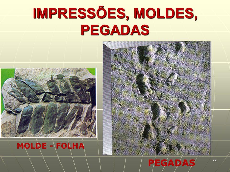 IMPRESSÕES, MOLDES, PEGADAS MOLDE - FOLHA PEGADAS 22