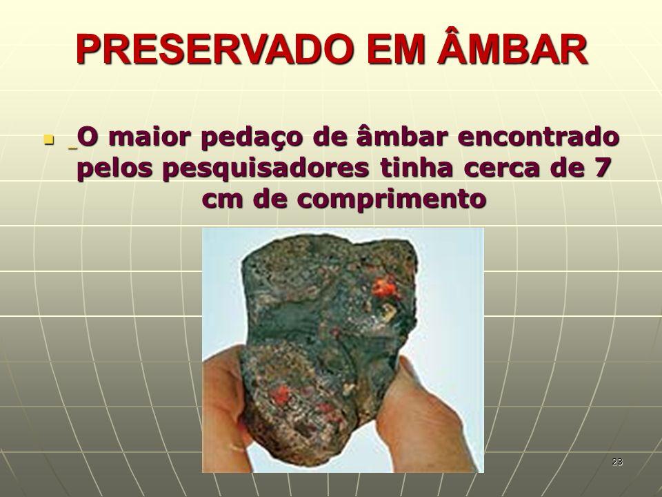 PRESERVADO EM ÂMBAR O maior pedaço de âmbar encontrado pelos pesquisadores tinha cerca de 7 cm de comprimento O maior pedaço de âmbar encontrado pelos