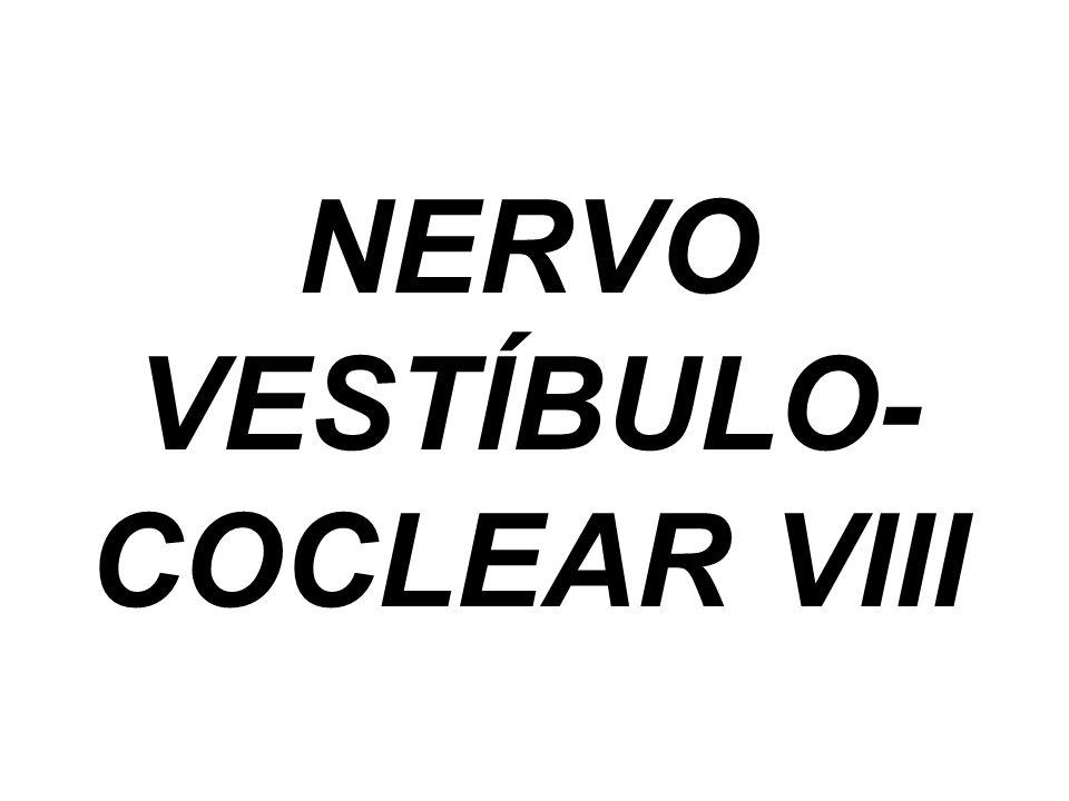 NERVO VESTÍBULO- COCLEAR VIII