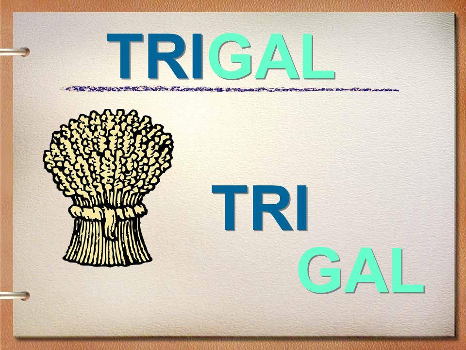 TRIGAL TRI GAL