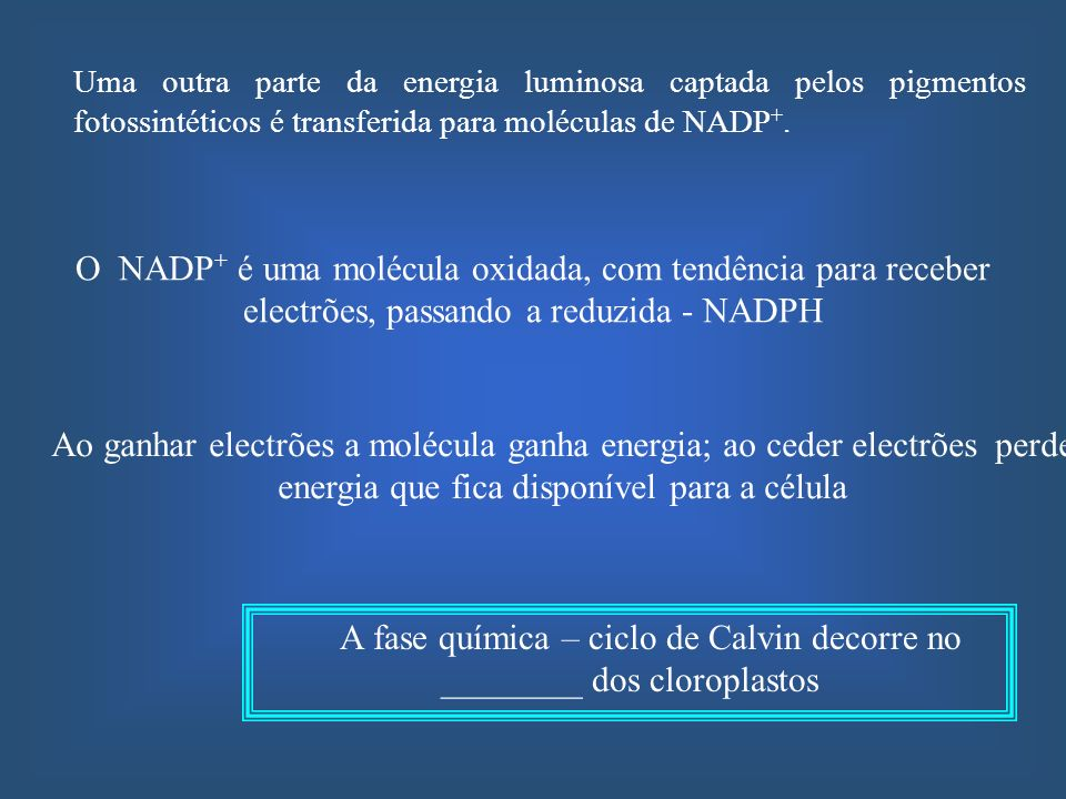 O NADP + é uma molécula oxidada, com tendência para receber electrões, passando a reduzida - NADPH Uma outra parte da energia luminosa captada pelos p