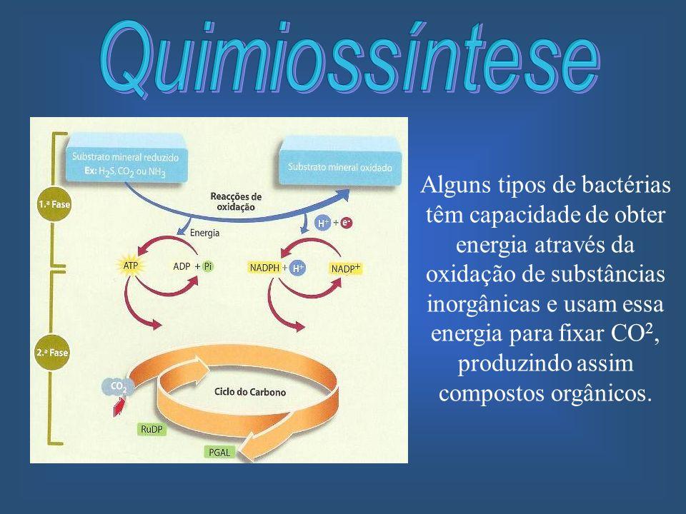 Alguns tipos de bactérias têm capacidade de obter energia através da oxidação de substâncias inorgânicas e usam essa energia para fixar CO 2, produzin